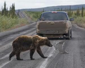 Dempster bear