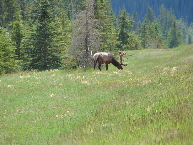 Elk smaller