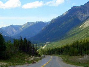 Fort Nelson to Liard Hot Springs getting closer and more animals in roadway