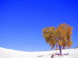 yelllow tree and white sands smaller